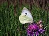 Biały motyl | Stock Foto