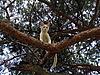 白色猫上树   免版税照片