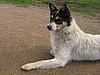 白狗   免版税照片