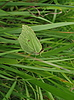 Żółty motyl na trawie | Stock Foto