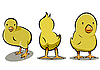 Vector clipart: three chicken