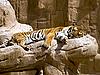 ID 3012759 | Tygrys | Foto stockowe wysokiej rozdzielczości | KLIPARTO