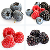 ID 3015779 | Berry collage | High resolution stock photo | CLIPARTO