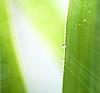 ID 3016542 | Wiosna liści z kropli wody | Foto stockowe wysokiej rozdzielczości | KLIPARTO