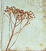 ID 3018136   Vintage flower on old book cover   High resolution stock photo   CLIPARTO