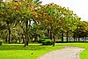 Park. Summer | Stock Foto