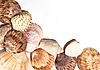 Shells | Stock Foto