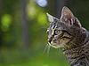 ID 3036780 | Szary kot | Foto stockowe wysokiej rozdzielczości | KLIPARTO