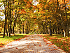 Autumn in the park | Stock Foto