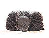 Photo 300 DPI: Chocolate cake