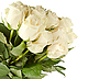 Bunch of white roses | Stock Foto