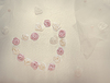 Wedding background with roses and heart sign | Stock Foto