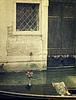 ID 3295420 | Gondola mit Strauß roter Rose. Venedig | Foto mit hoher Auflösung | CLIPARTO