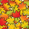Vector clipart: Maple leaves background