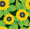 Vector clipart: Abstract sunflowers background