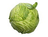 Single green cabbage with dew | Stock Foto