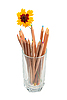 Photo 300 DPI: multicolored wood pencils and yellow flower in glass