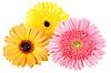 Photo 300 DPI: Three flower with dew