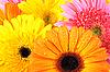 ID 3032872 | 핑크와 오렌지 꽃 배경 | 높은 해상도 사진 | CLIPARTO