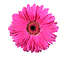 ID 3032890 | Pink flower | High resolution stock photo | CLIPARTO