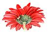 ID 3032978 | Rote Blume | Foto mit hoher Auflösung | CLIPARTO