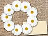 Photo 300 DPI: round frame with white flowers