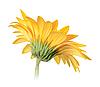 Volver a lado de la flor amarilla | Foto de stock