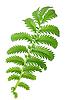 Zielone liście | Stock Foto
