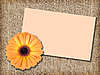 Orange flower with message-card   Stock Foto