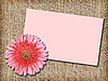 Photo 300 DPI: pink flower with message-card