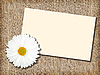 White flower with message-card | Stock Foto