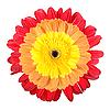 Three flowers | Stock Foto
