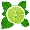 Slice of lime with green leaves | Stock Foto