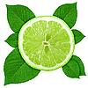 ID 3033067 | Лайм с зелеными листьями | Фото большого размера | CLIPARTO