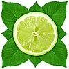 Plasterek wapna z zielonych liści | Stock Foto