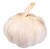 Photo 300 DPI: white garlic