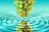 Reflection of green grape in water | Stock Foto