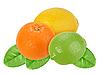 Orange, lemon and lime on green leaves | Stock Foto