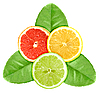 Three slices of citrus fruits on green leaves | Stock Foto
