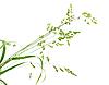 绿草分行 | 免版税照片