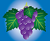Vector clipart: Grape