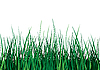 Vector clipart: Green grass