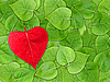 Photo 300 DPI: Valentine background with leaves