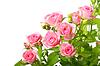緑の葉とピンクのバラのグループ | 写真
