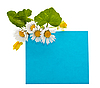 Photo 300 DPI: blue space for your text with fresh flowers