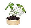 ID 3014003 | 年轻的植物在地面 | 高分辨率照片 | CLIPARTO