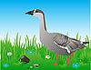 Goose in the meadow | Stock Vector Graphics