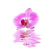 ID 3014403 | Rosa Orchidee | Foto mit hoher Auflösung | CLIPARTO
