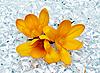 Kwiaty w lodzie | Stock Foto