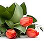 ID 3014582 | Bukiet tulipanów na białym tle | Foto stockowe wysokiej rozdzielczości | KLIPARTO